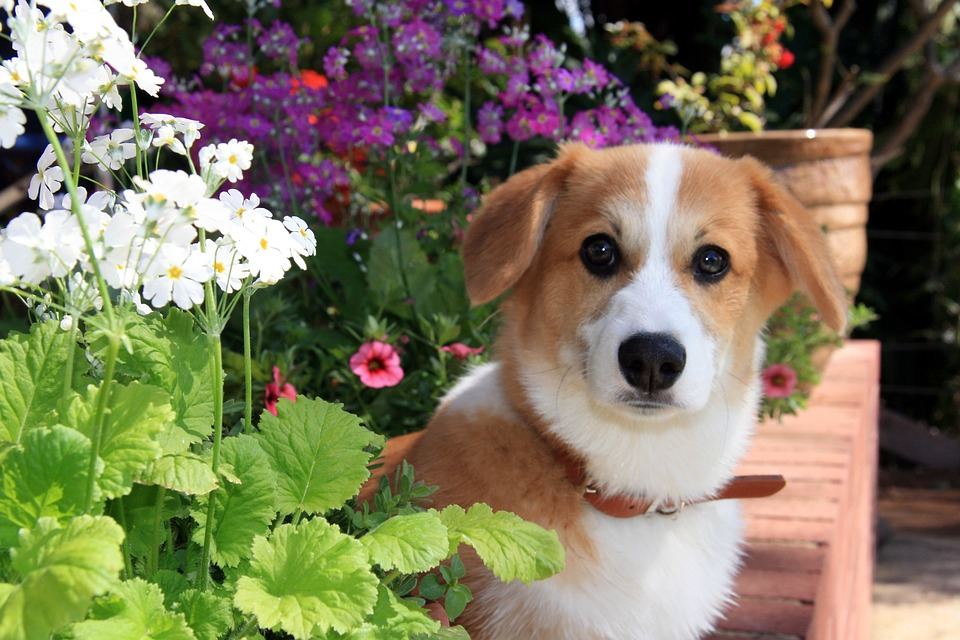 Dog Health Tips for the Spring