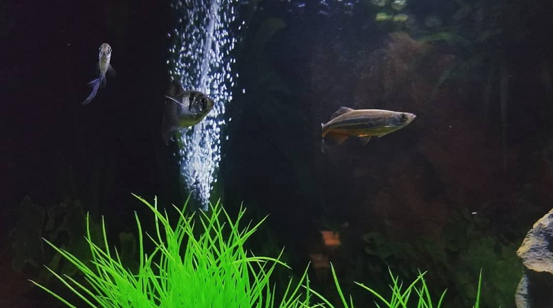 Aquarium Aeration Basics for Your Fish Tank