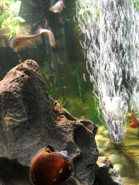 Aquarium Aeration Basics