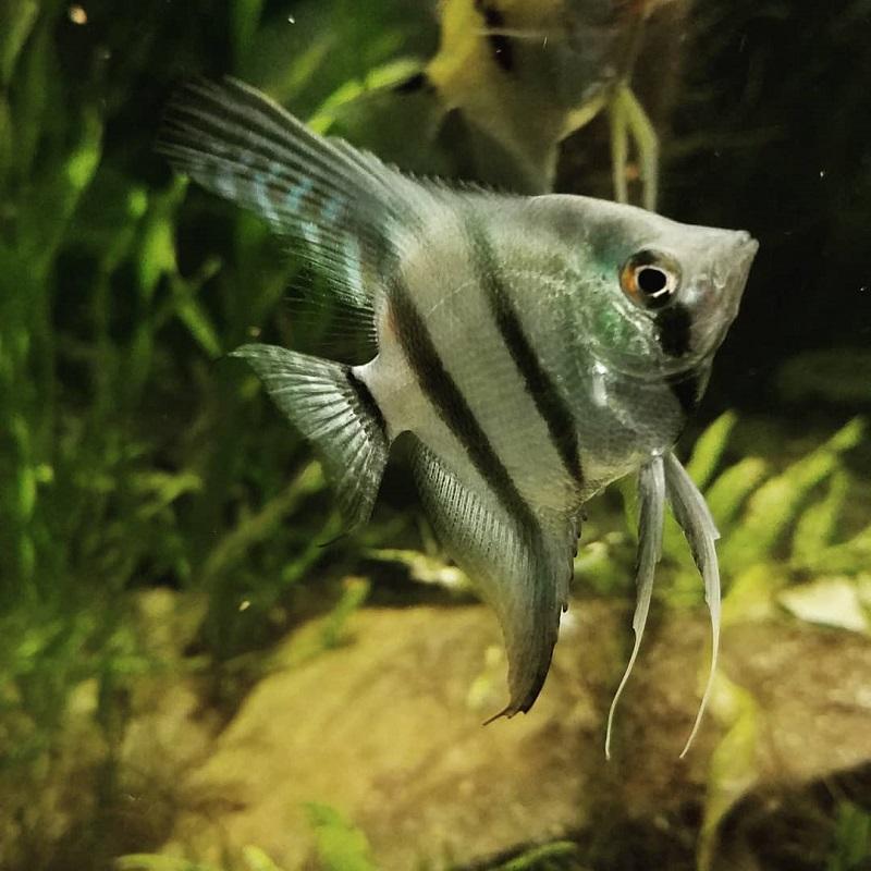 An Introduction to Aquariums and Aquarium Fish