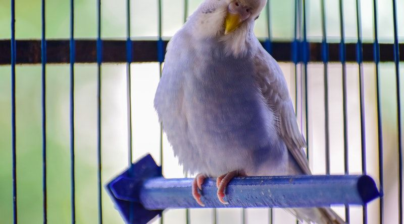 8 Simple Tips For Keeping Your Pet Birds Healthy