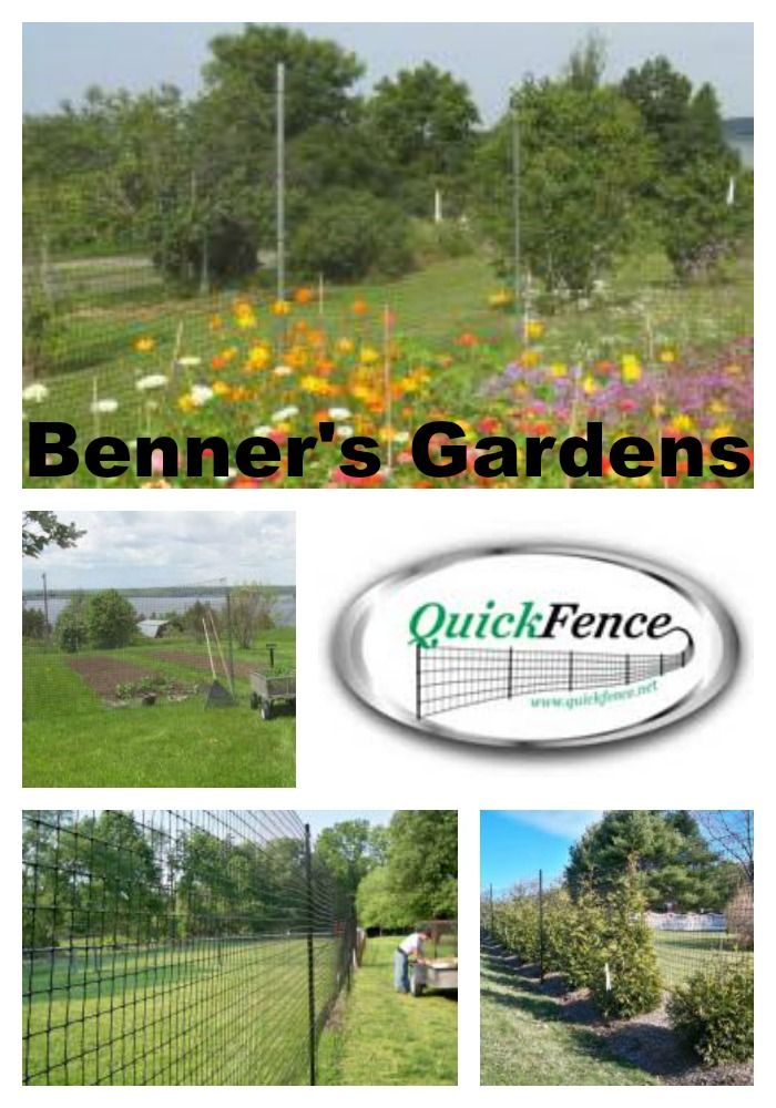 Benner's Gardens Fencing for Backyard Chickens